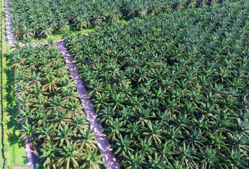 Compromiso  de la palma de aceite en el reto global de reducción de gases de efecto invernadero