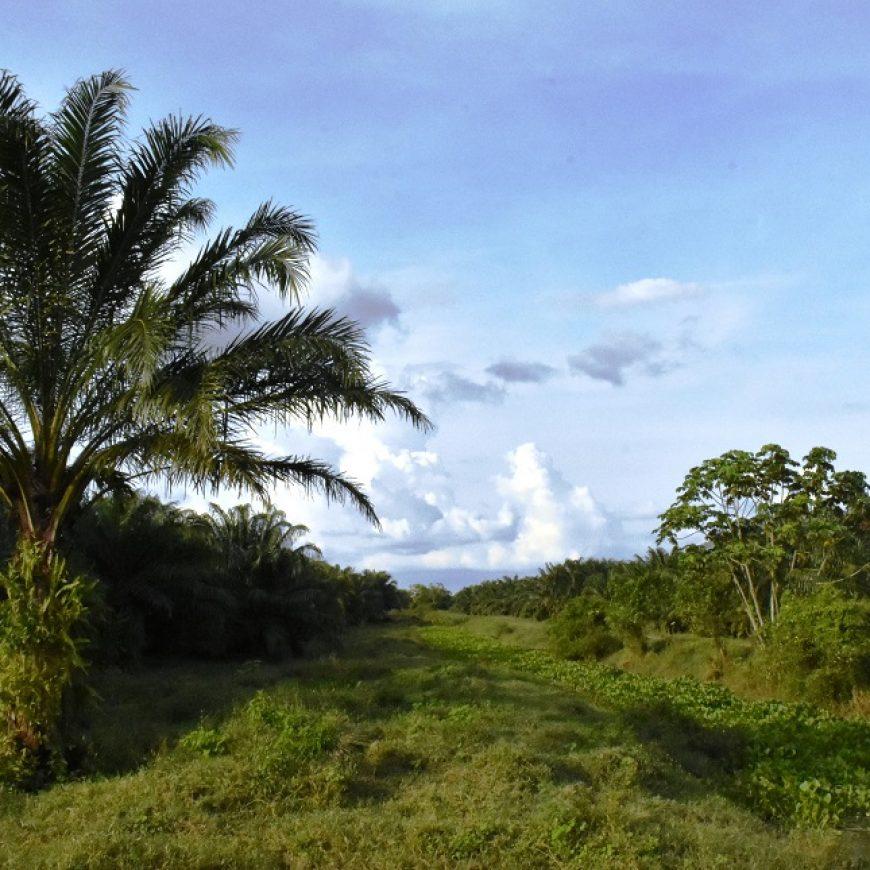 Estudio de Alto Valor de Conservación (AVC) para proveedores de Palmas del Cesar