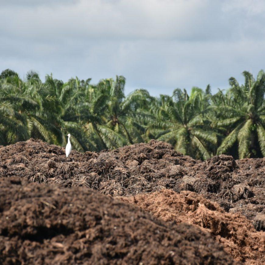 Palmas del Cesar S.A. inicia proyecto de Tratamiento de Biomasa residual