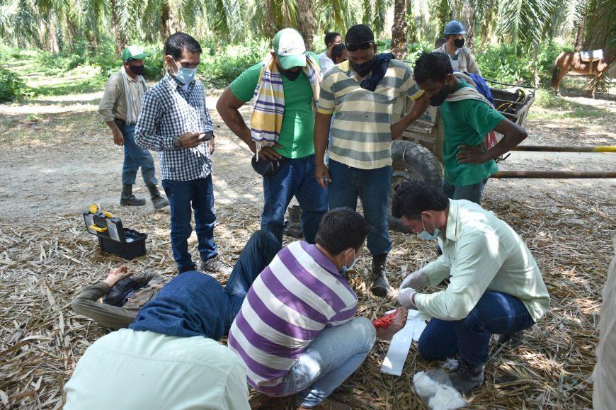 Simulacro de emergencias trabajadores agronomía
